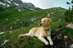 Hund am Nebelhorn