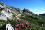 Alpenrosen am Nebelhorn