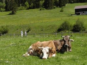 Wanderer, Berge und Kühe - typisch Oberstdorf