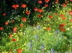 Blumenpracht auf Lesvos