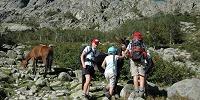Korsika - Esel am Weg