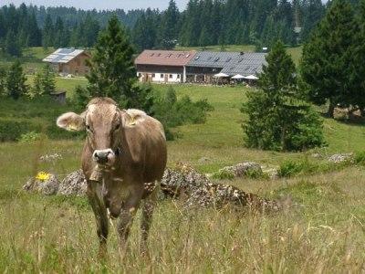 An der Hörmoos Alpe