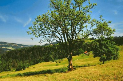 Berglandschaft im Imberggebiet