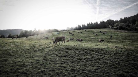 Viehscheid Berghofen 2018