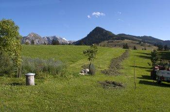 ALMS Alpen Sommerwiese