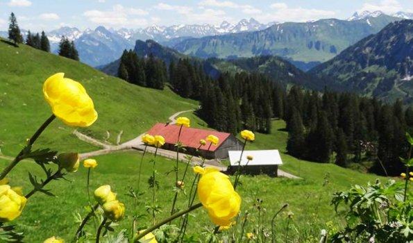 Sommerbild Alpe