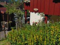 umgeben von Sommerblumen