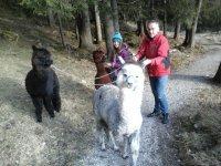 Unsere Alpakas lieben Spaziergänge