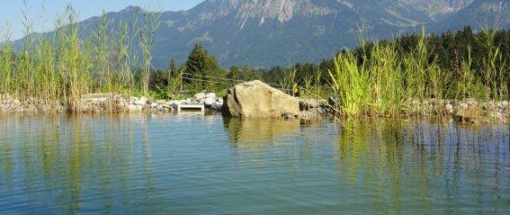 Panorama Schwimmteich Sommer