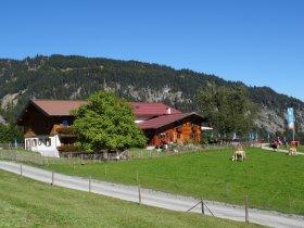 Blick auf die Alpe mit Kühen