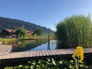 Schwimmteich mit Blick auf die Alpe Dornach