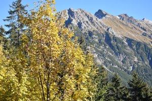 Das Walmendingerhorn im Herbst