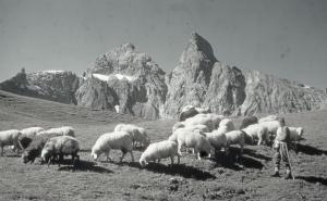 Der Älpler mit seinen Schafen