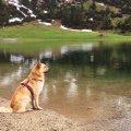 Hund am Gaisalpsee1
