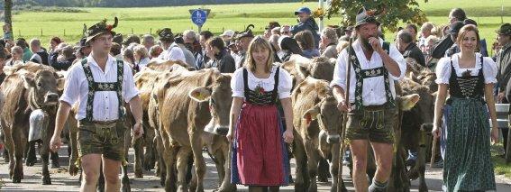 Viehscheid Bolsterlang