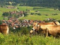 Blick auf Niederdorf mit Kuh