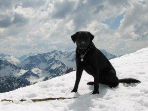 Amadeus im Schnee