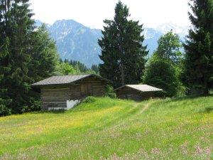 Hütten mit Blumenwiese