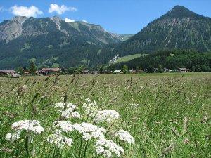 Schanzen u. Nebelhorn