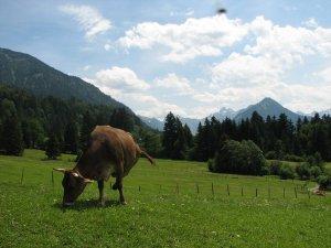 Susi mit dem Bergpanorama