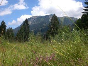 Moorweiher - Blick auf Rubihorn