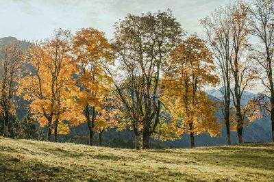 Am Moorweiher im Herbst