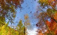Blätterzauber