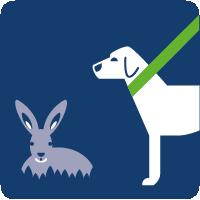 01a-Hunde anleinen
