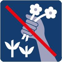 03-Pflanzen