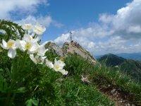 Wandern Hochgrat Nagelfluh (6)