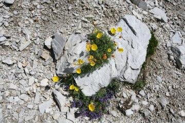 Wandern Karnischer Höhenweg (13)