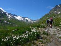 Wandern Schweizer Alpenüberquerung (50)