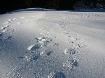 SchneeschuhAllgäuRohrmoos (11)