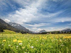 Landschaftsbild Blumenwiese