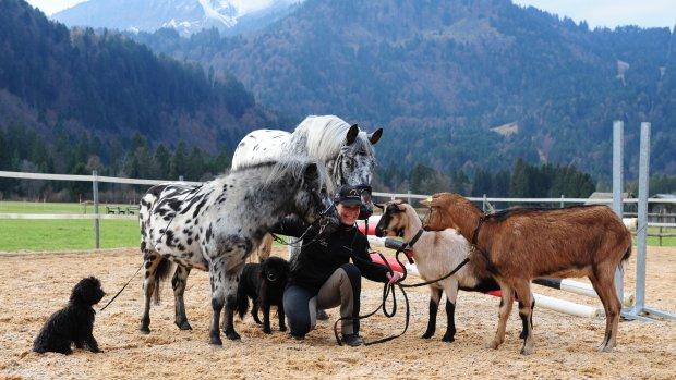 Tiergruppe quer