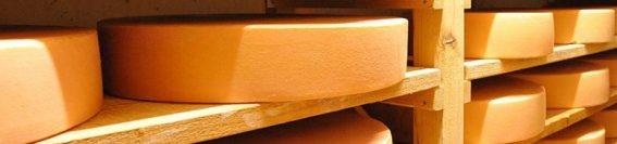 Allgaeuer-bergkaese-von-gluecklichen-kuehen