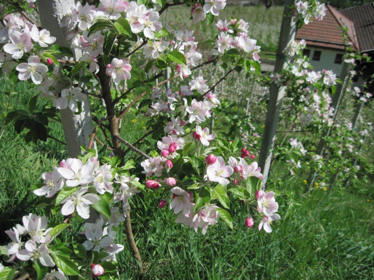 Ein hauch von Frühling