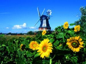 Windmühle Wrixum Föhr