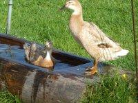 Unsere glücklichen Enten