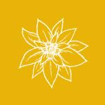 Edelweiss-01