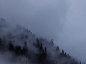 Nebel tramino