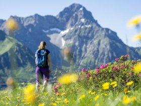Alpenrosen Wandern Widderstein @Dominik Berchtold (3) (c) Dominik Berchtold - Kleinwalsertal Tourismus eGen   Fotograf Dominik B