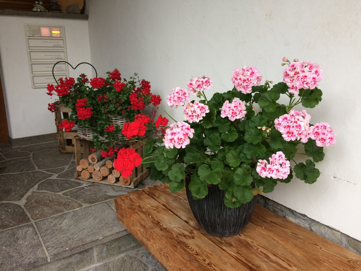 Blumen Hauseingang