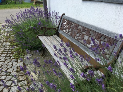Lavendelbank am Haus