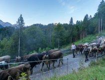 Oberstdorfer Viehscheid 13.09-008 Kopie