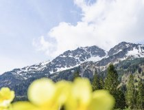 Frühling in Einödsbach