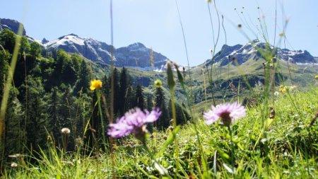Bergwiese