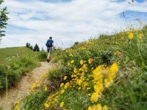 Blumenwiesen schmücken den Wanderweg