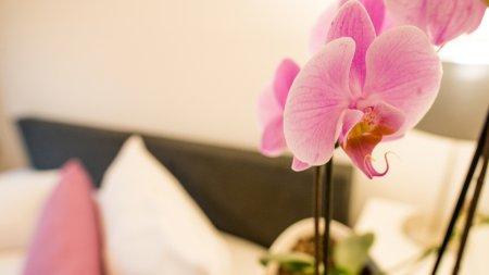 Frische Orchideen auf dem Zimmer