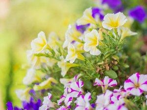 Bunte Blumen schmücken den Balkon